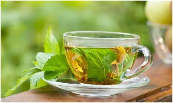 Польза и вред мята в чае
